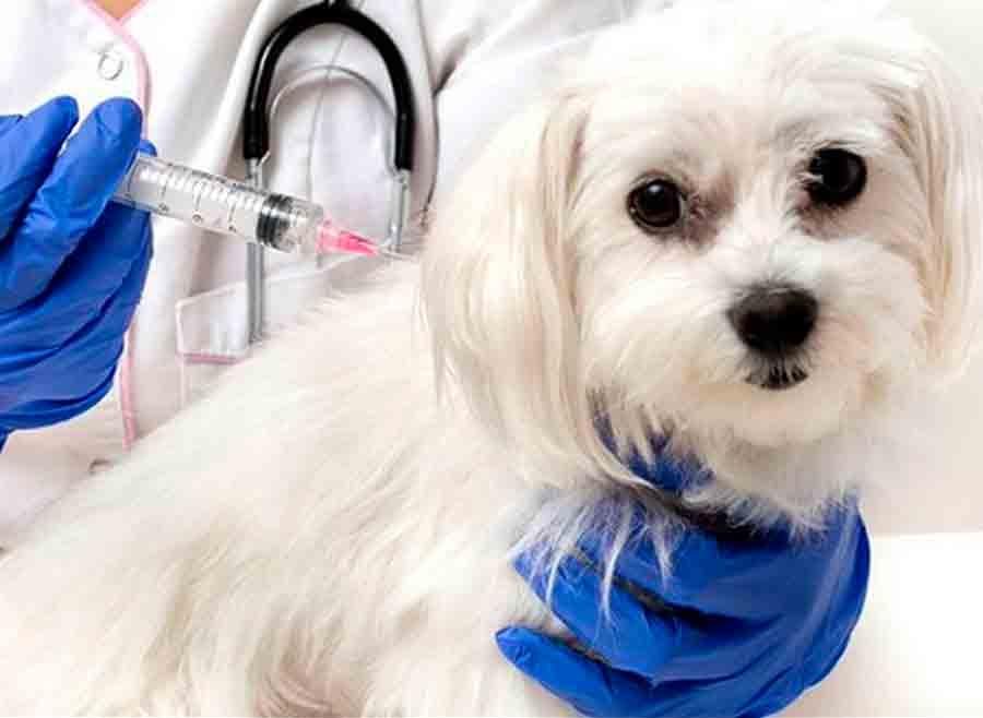 Por acciones preventivas, cero fallecimientos en México por rabia transmitida por perros desde 2006